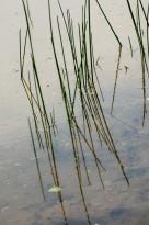 waterriet