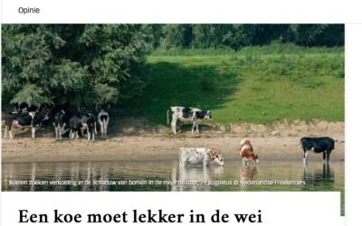 Een koe moet lekker in de wei kunnen lopen